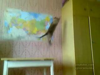 Позитивная нарезка с котиками